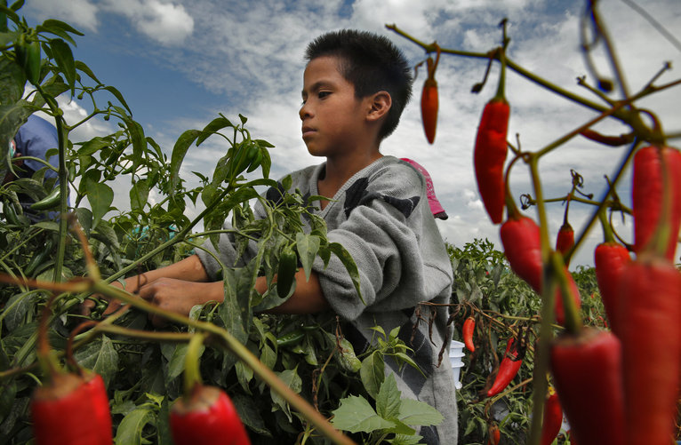 Modern day slavery conditions for agricultural workers in mexico